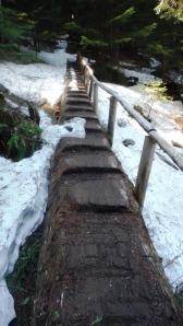 Trail Footlog